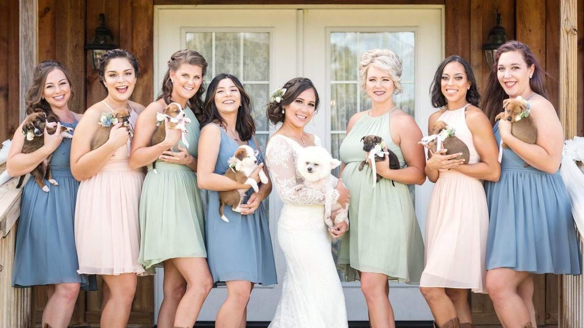 Невеста раздала подружкам бездомных щенков вместо букетов