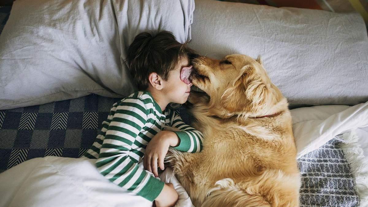 Як дітям подружитися з собаками