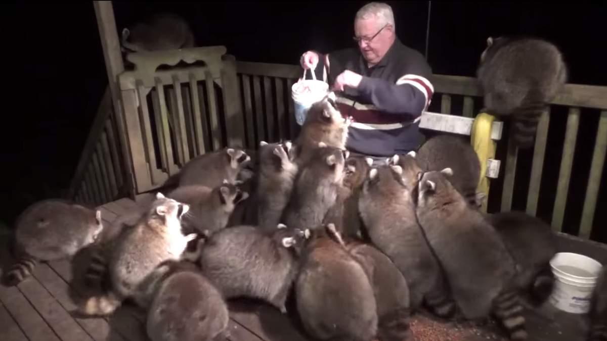 Джеймс Блэквуд каждый вечер кормит енотов в память об умершей жене
