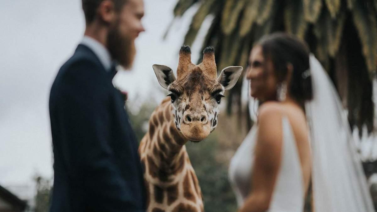 Лучшие свадебные фото 2020 года: победители Junebug Weddings