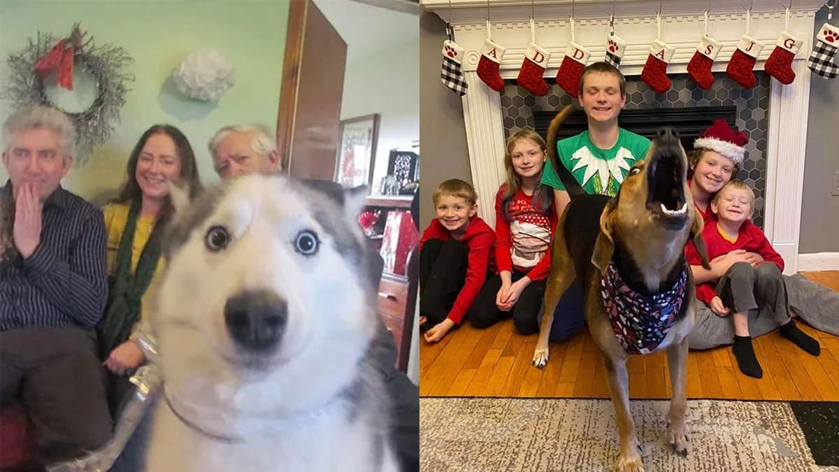 """Як собаки вдало """"покращують"""" святкові сімейні фото: кумедна підбірка"""