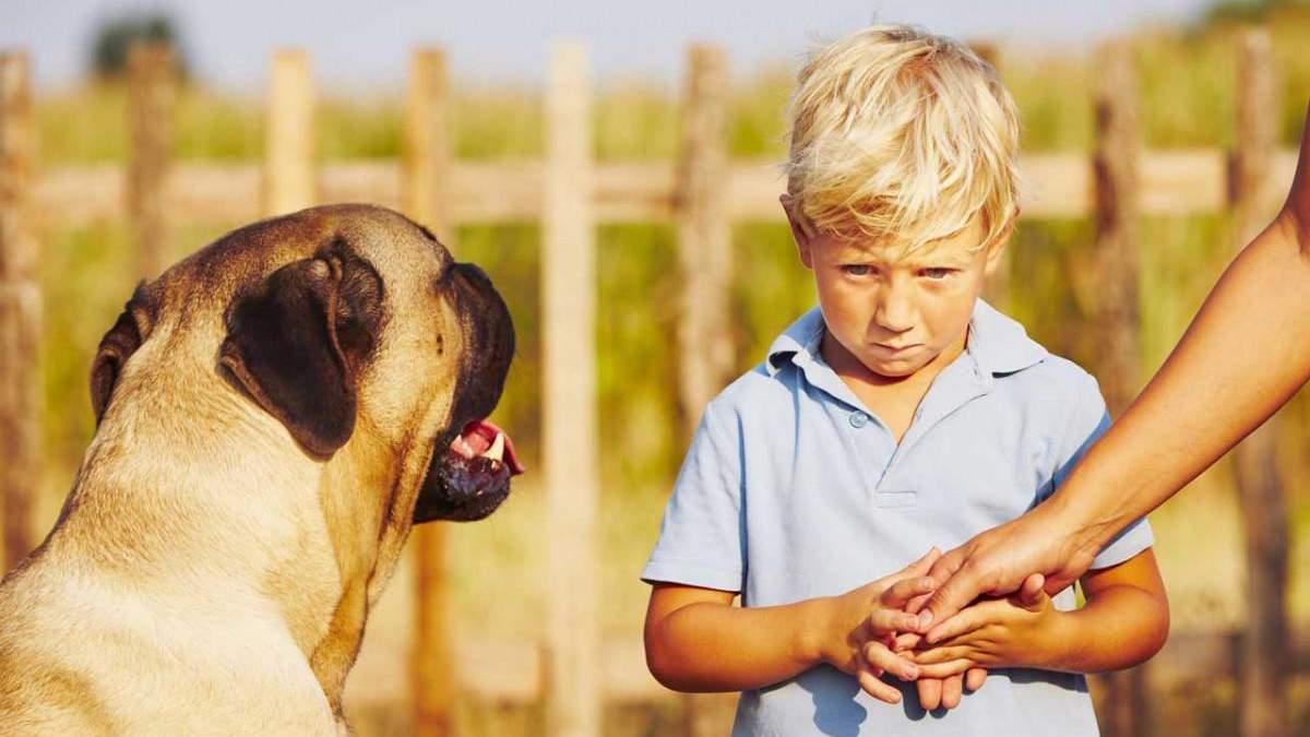 Страх дитини перед тваринами: як допомогти подолати фобію