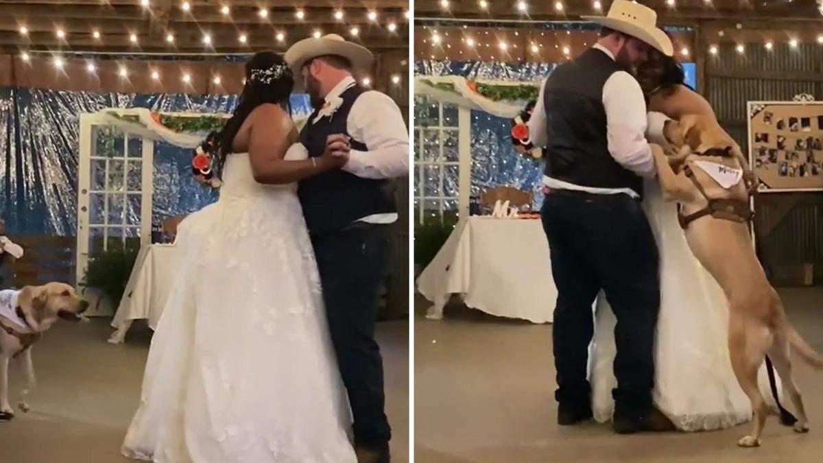 Во время свадебного танца к молодоженам присоединился пес: видео