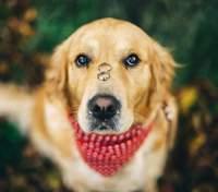 Собака проглотила кольцо, когда девушка хотела сделать фото: курьезное видео