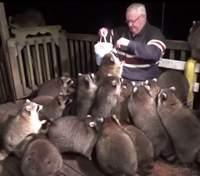 Мужчина каждый вечер кормит енотов в память об умершей жене: фото и видео