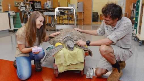 Пожежі в Австралії: сім'я відомого зоозахисника Ірвіна рятує тварин від смерті – моторошні фото