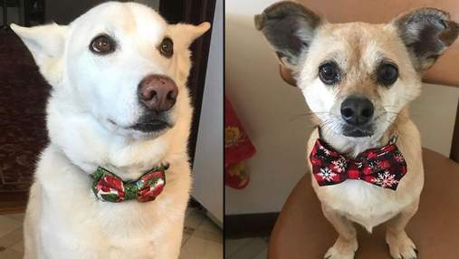 13-річний хлопчик відкрив власну компанію і створює краватки для бездомних тварин: милі фото