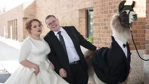 Парень привел ламу на свадьбу своей сестры: забавная реакция девушки