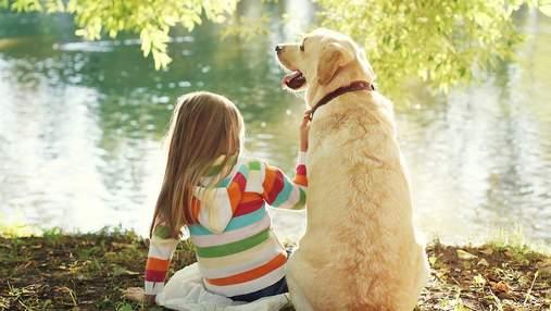Домашний любимец в семье: что о животных должны знать и понимать дети